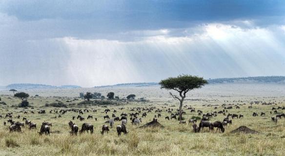 africa-herd