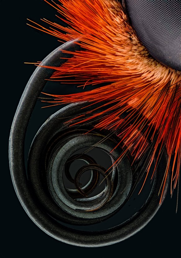 microscope-photos-nikon-small-world-2016-butterfly-proboscis