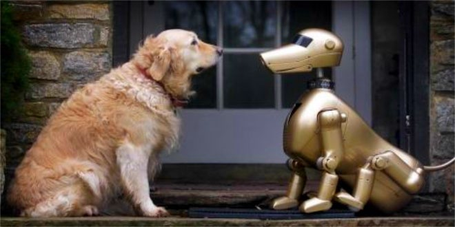 robotic-pets-may-replace-real-ones