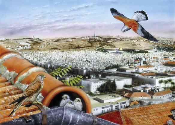 reconciliation_ecology